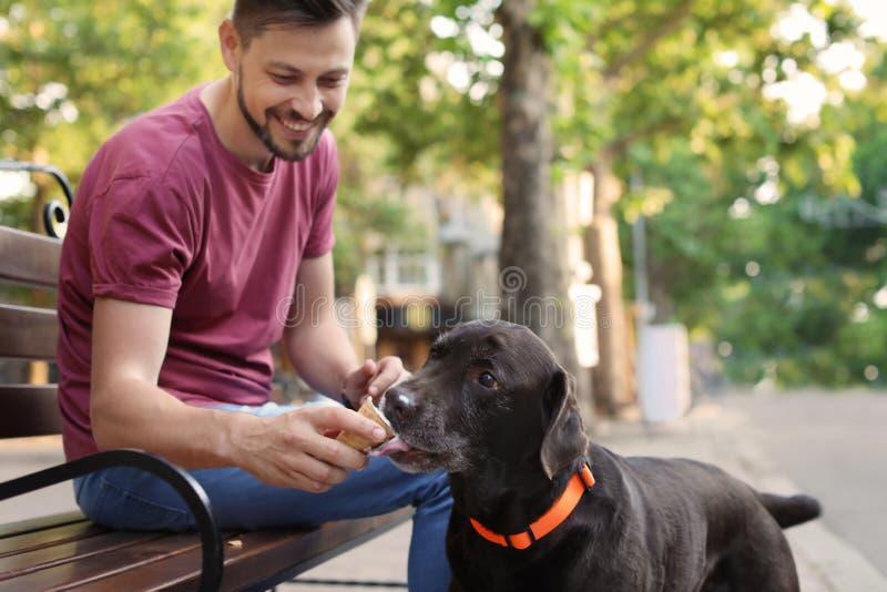 Inhaber, der sein braunes labrador retriever mit Eiscreme behandelt lizenzfreie stockfotografie