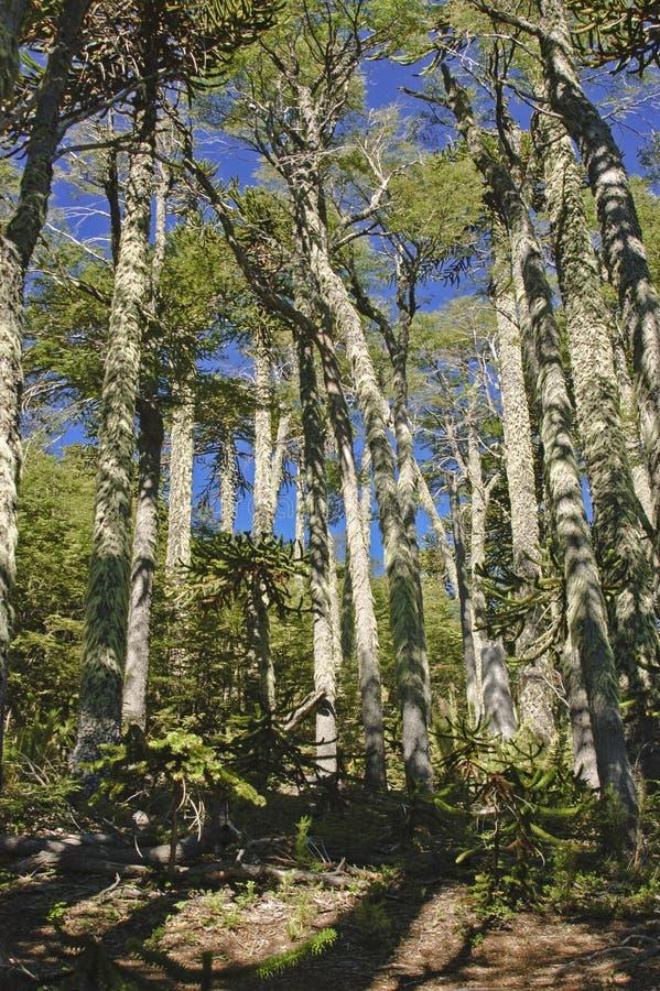 Download Inheems bos stock foto. Afbeelding bestaande uit bladeren - 29504006
