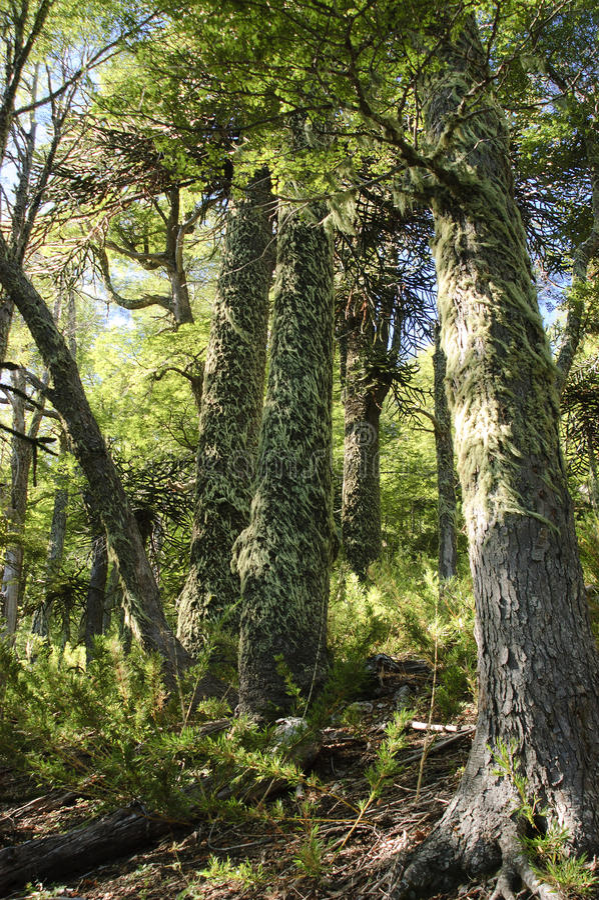 Download Inheems bos stock afbeelding. Afbeelding bestaande uit bladeren - 29504195