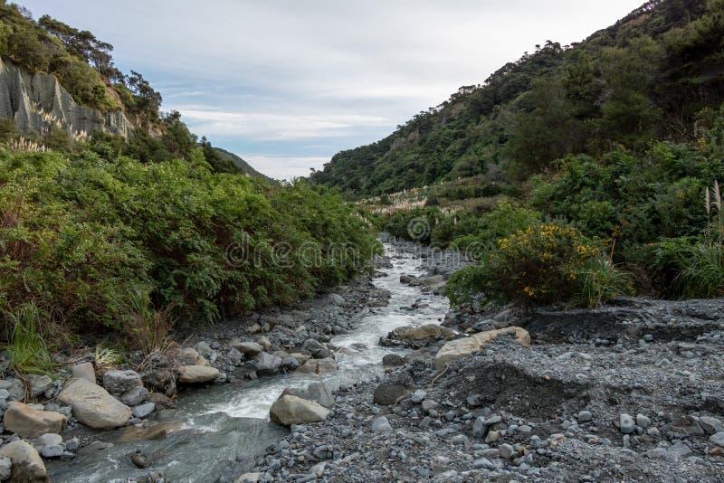 Inheems Nieuw Zeeland Bush royalty-vrije stock foto