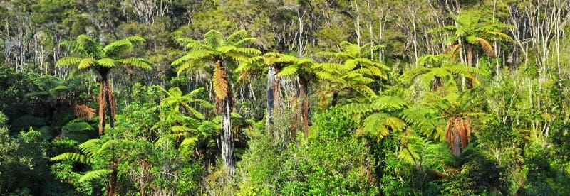 Inheems van de Struik Panorama Als achtergrond, Nieuw Zeeland royalty-vrije stock fotografie
