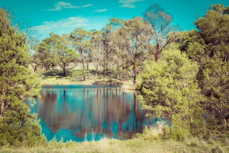 Inheemse Australische struik en bomen die in een vijver nadenken royalty-vrije stock foto