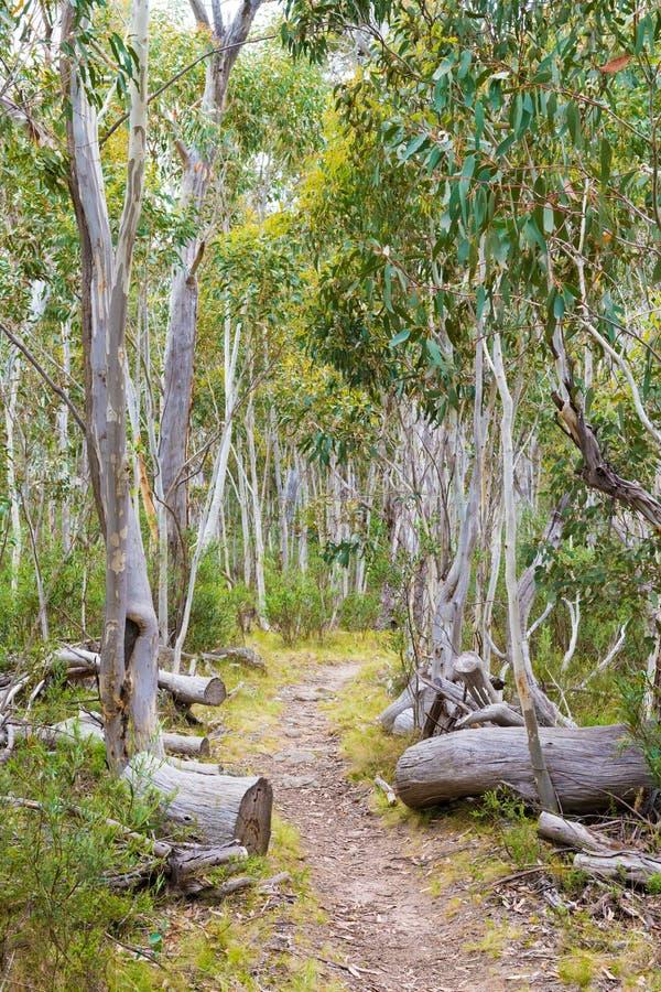 Inheemse Australische vegetatie in het Nationale Park van Kosciuszko, NSW, Australië stock fotografie