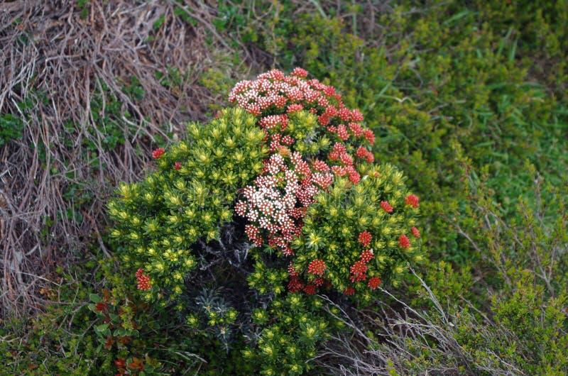 Inheemse bloemen stock afbeeldingen
