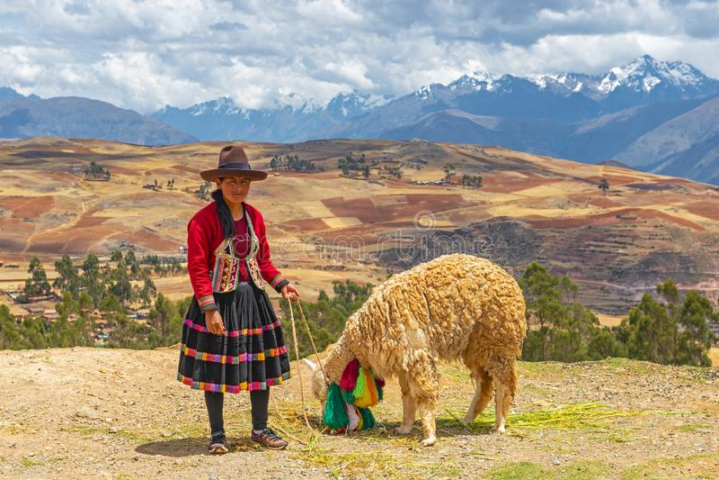 Inheemse Quechua Dame met Alpaca, Peru stock foto's