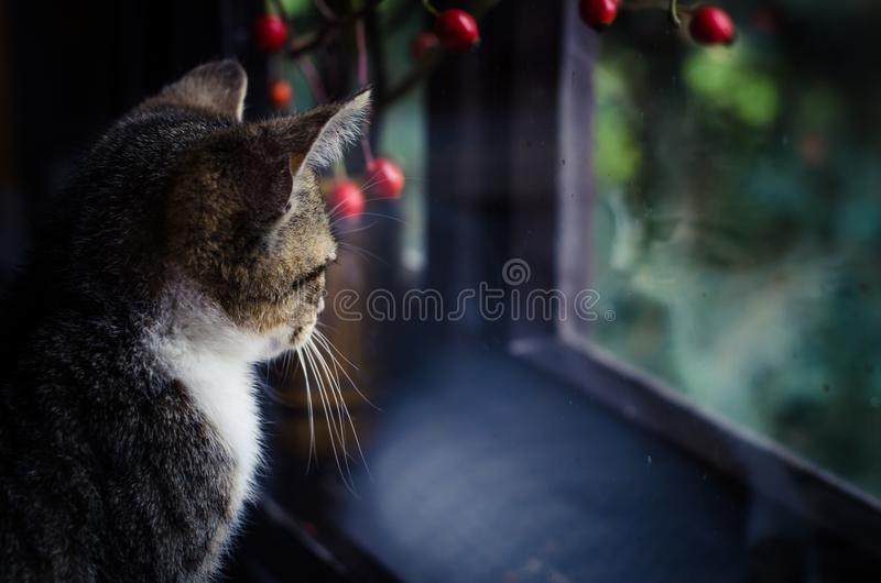Inhemsk katt bak bakre sikt för fönster arkivbild