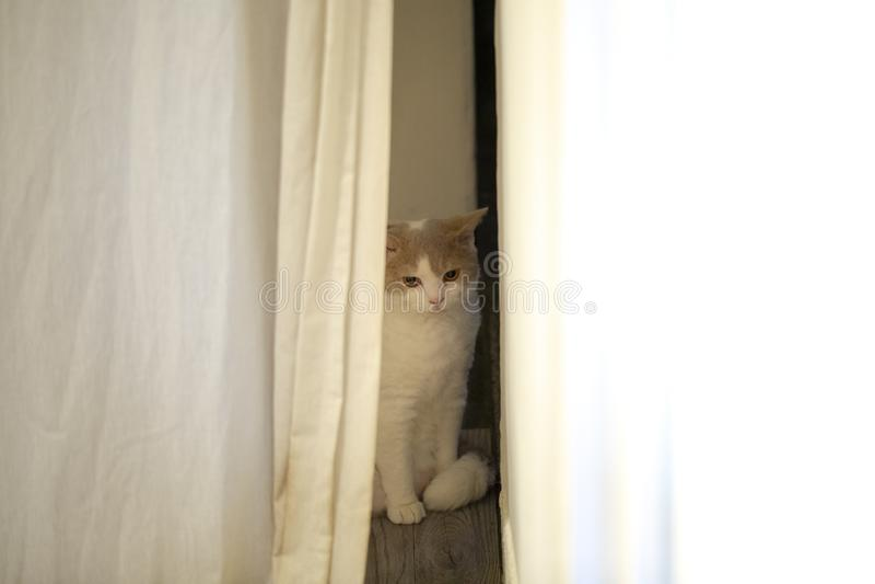 Inhemsk katt som är gullig, katt, nyfiket som är lat fotografering för bildbyråer