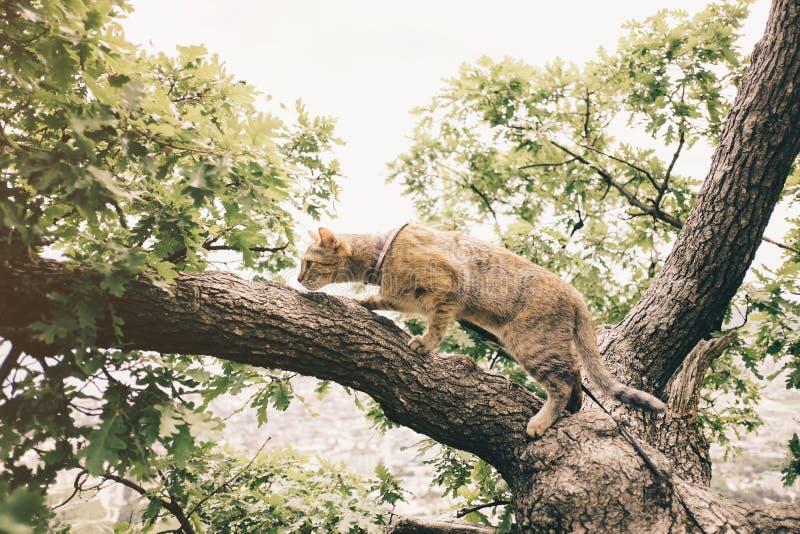 Inhemsk katt som går på det utomhus- trädet royaltyfria bilder