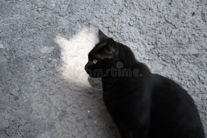 Inhemsk svart katt nära väggen arkivbilder