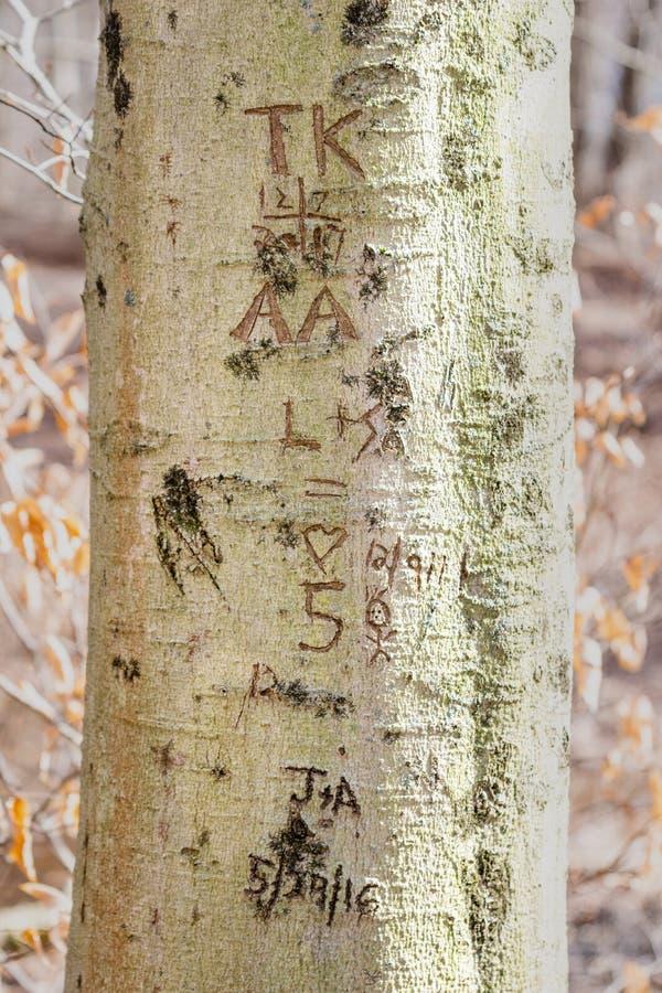 Inicjały i daty rzeźbiący w drzewnego bagażnika, obrazy stock