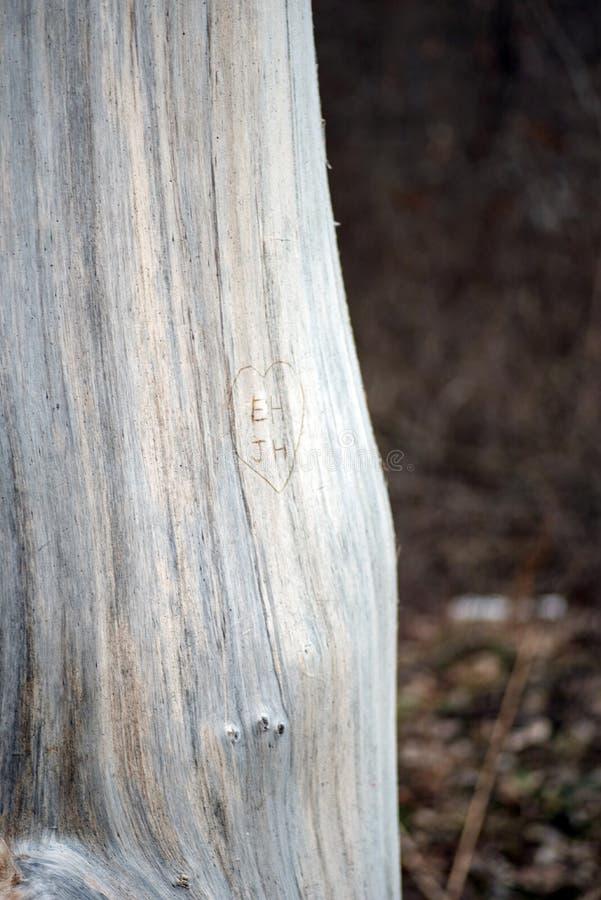 Inicjały i serce rzeźbili w drzewo zdjęcia stock