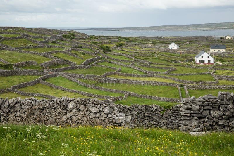 Inisheer, Aran islands, Ireland. Countryside on the Aran island of Inisheer, Ireland royalty free stock images