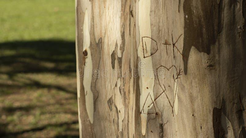 Initiala vänner som är skriftliga i en trädstam, eukalyptusstam royaltyfria foton
