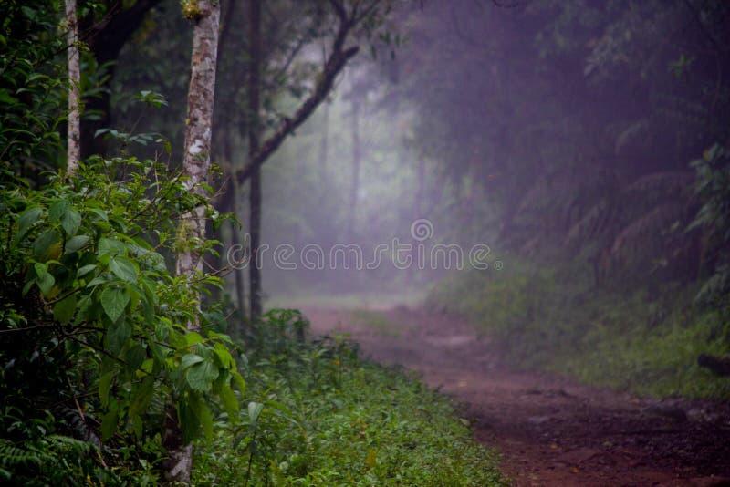 inizio del giorno di una mattina estiva nella foresta pluviale fotografie stock