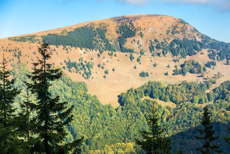 Inizio dell'autunno nel maggior parco nazionale di Fatra immagini stock libere da diritti