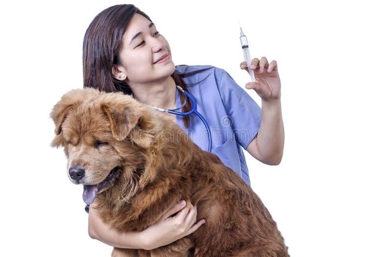 Injectie voor een Zieke Hond stock afbeeldingen