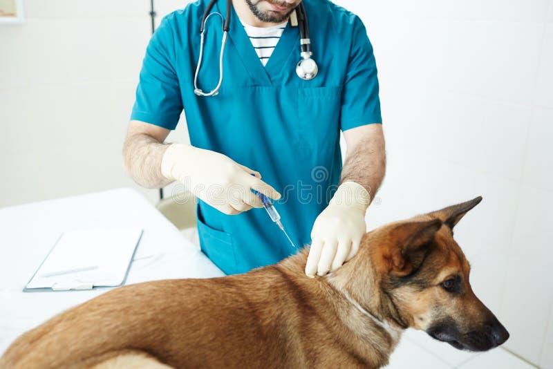 Injektion för hund arkivfoton