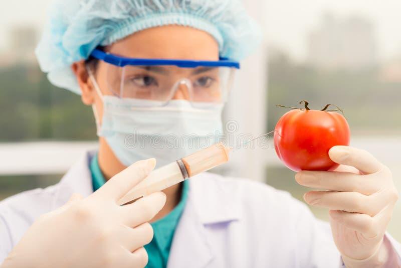 Injetando o tomate imagens de stock
