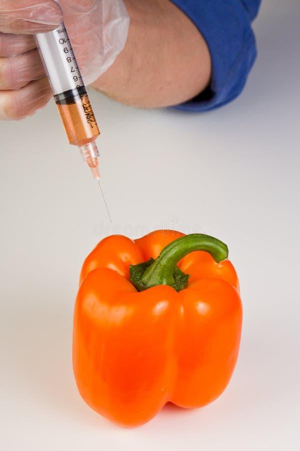 Injetando uma pimenta de sino do gmo imagens de stock