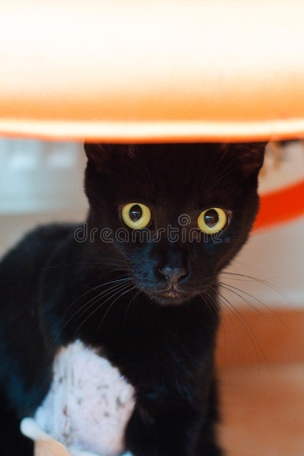 Download Injured cat stock image. Image of veterinary, fracture - 23987961