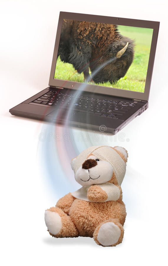 Injured teddy bear stock photos