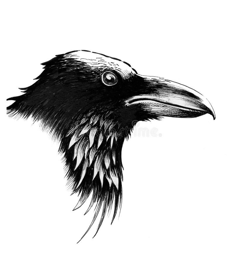 Raven bird vector illustration