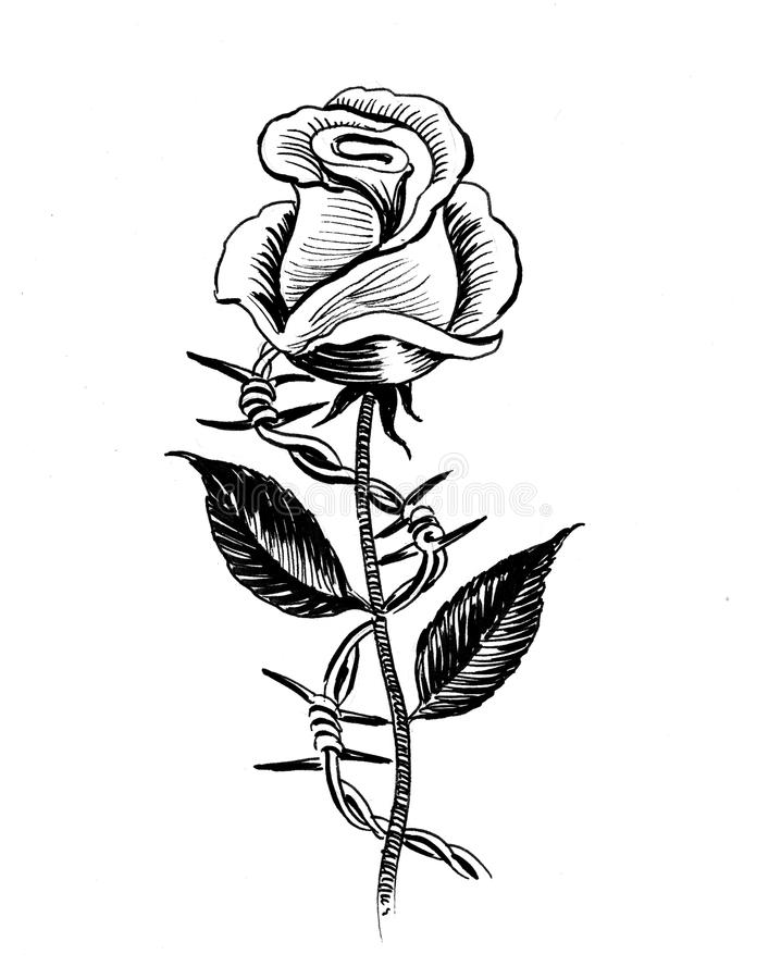 Rose and barbed wire. Ink black and white illustration of a single rose flower and barbed wire vector illustration