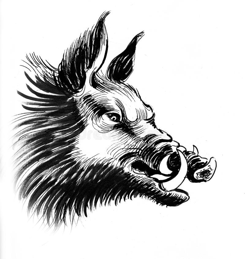 Angry wild boar. Ink black and white illustration of a wild boar head stock illustration