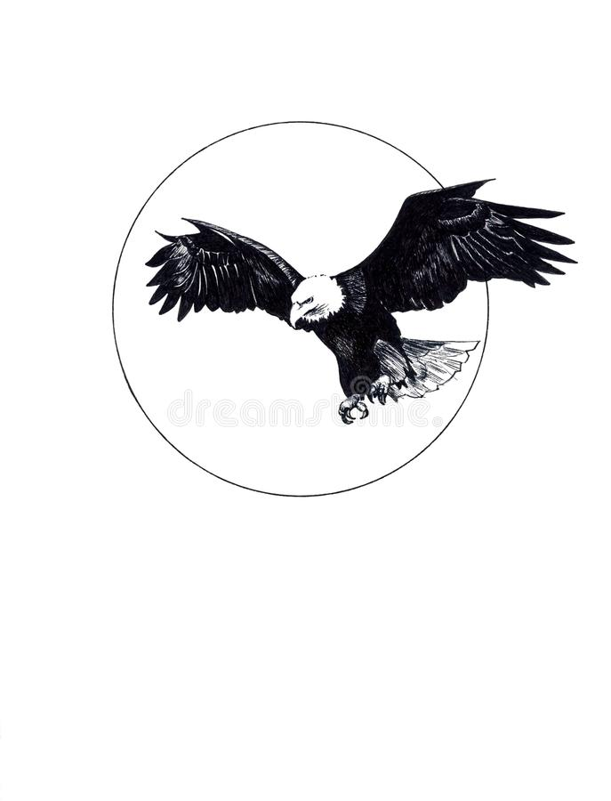Download Ink Drawing Of Eagle Stock Images - Image: 19787344
