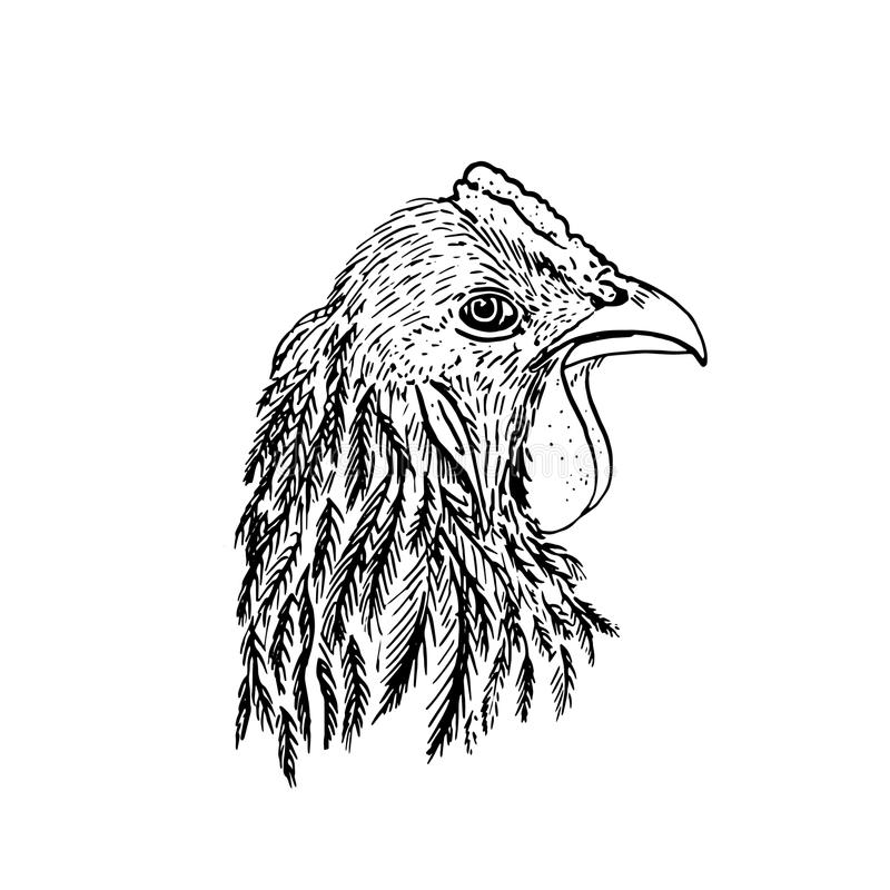 Ink drawing head of chiken vector illustration