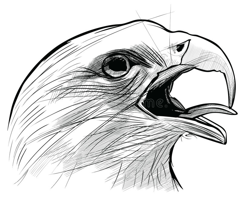 Ink drawing of Langkawi eagle vector illustration