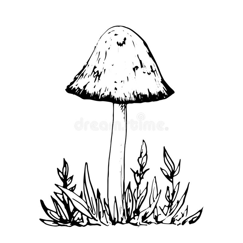 Line Drawing Grass : Ink drawing mushroom and grass stock vector illustration