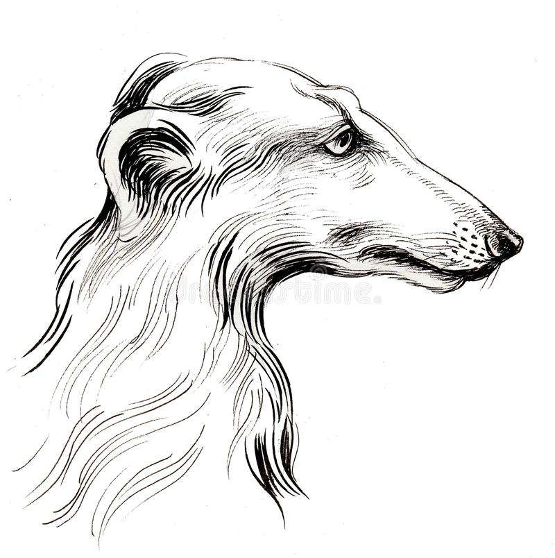 Borzoi dog. Ink drawing of a Russian borzoi dog stock illustration