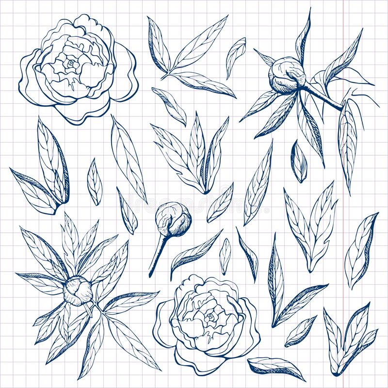 ink free hand drawn peonies collection. Pencil sketch of flower and leaves on sheet of paper. flower,branches,buds and leaves of stock illustration