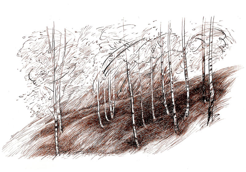 Ink hand drawing landscape with a birch tree forest. Ink hand drawing landscape with a mountain birch tree forest stock photo