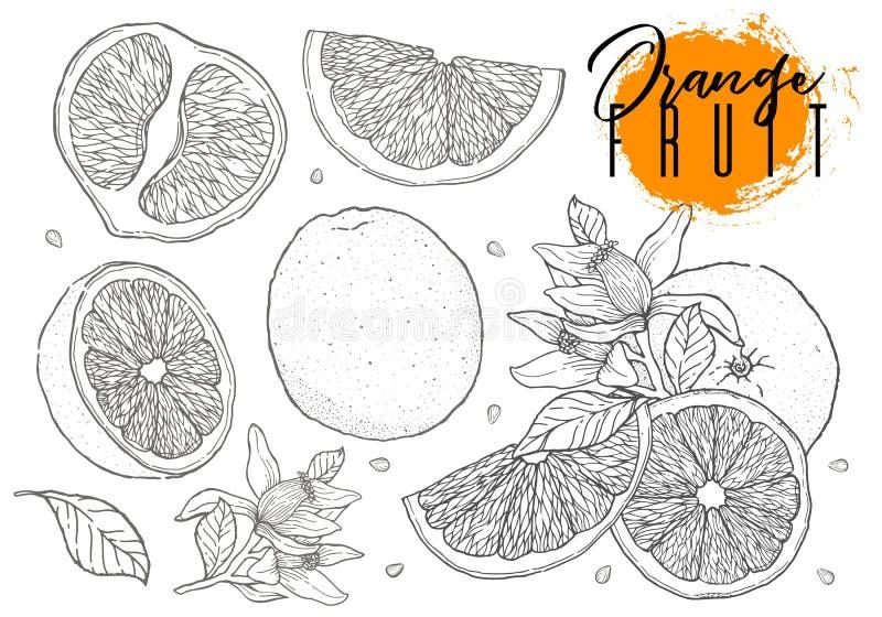 Ink hand drawn set of orange fruit. Food element collection. Vintage sketch. Black outline. Drawings of whole, half and sliced rip. Ink hand drawn set of orange stock illustration