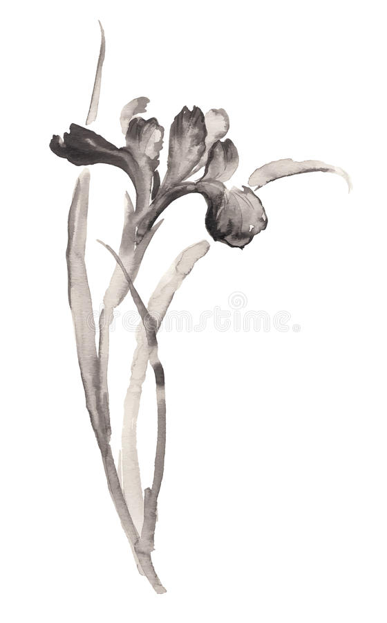 Ink illustration of blooming iris flower. Sumi-e style. Ink illustration of flower iris. Sumi-e, u-sin, gohua painting style. Silhouette made up of black brush stock illustration