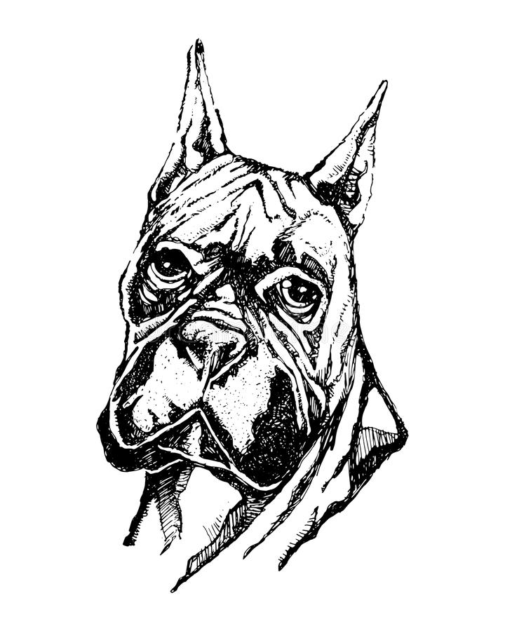 Ink illustration of a boxer dog head royalty free illustration