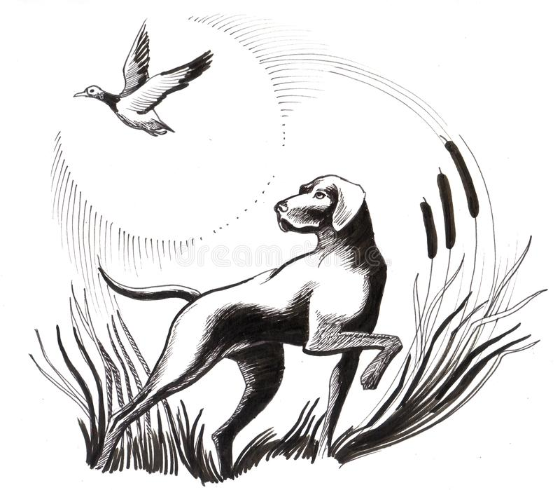 Dog and duck. Ink illustration of a flying duck and hunting dog vector illustration