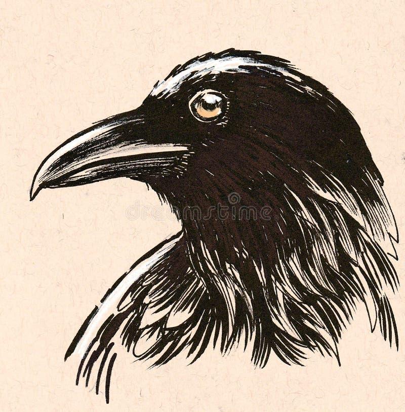 Black raven royalty free illustration