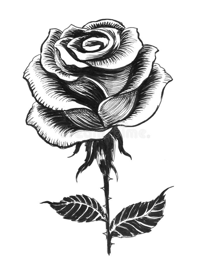 Ink rose stock illustration image of rose illustration - Rose noir dessin ...