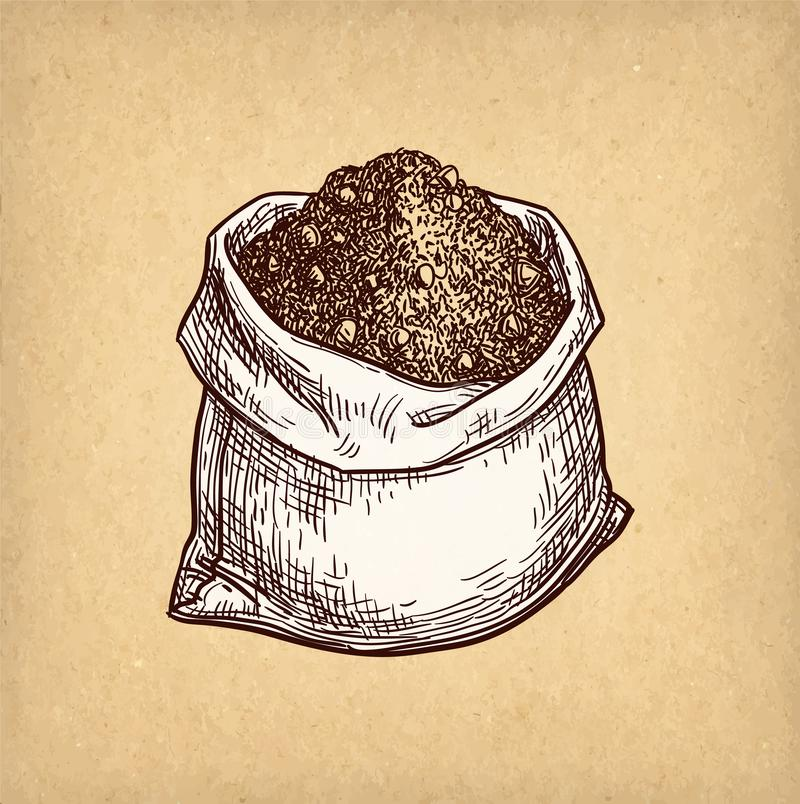 Ink sketch of cocoa. stock illustration