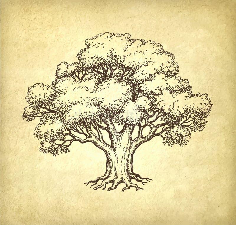 Ink sketch of oak tree. stock illustration