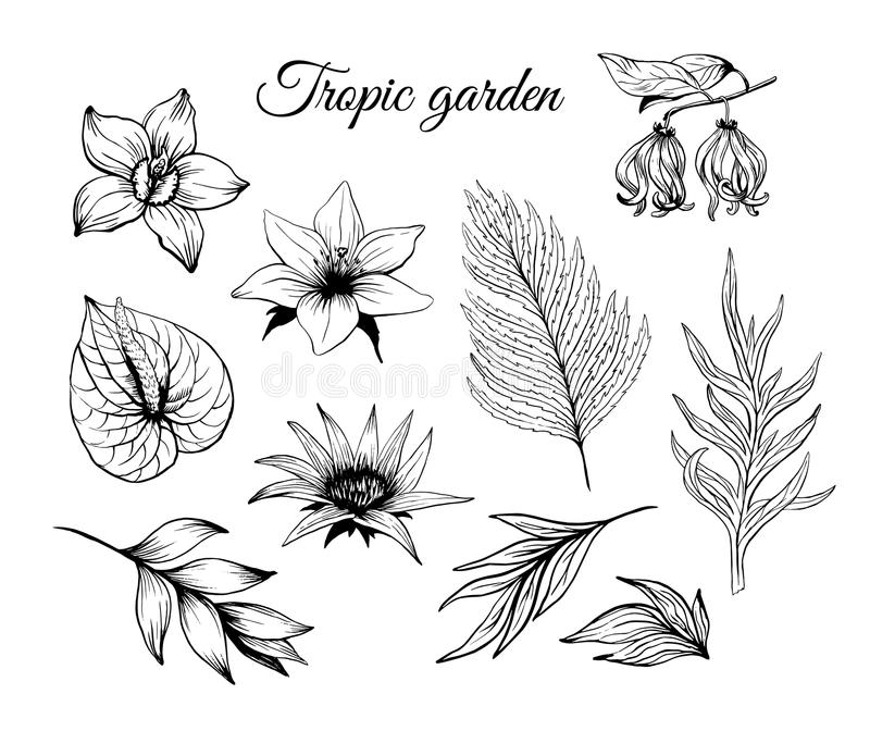 Ink sketch tropical flowers and leaves set vector isolated on white background. Orchid plant lily drawing stock illustration