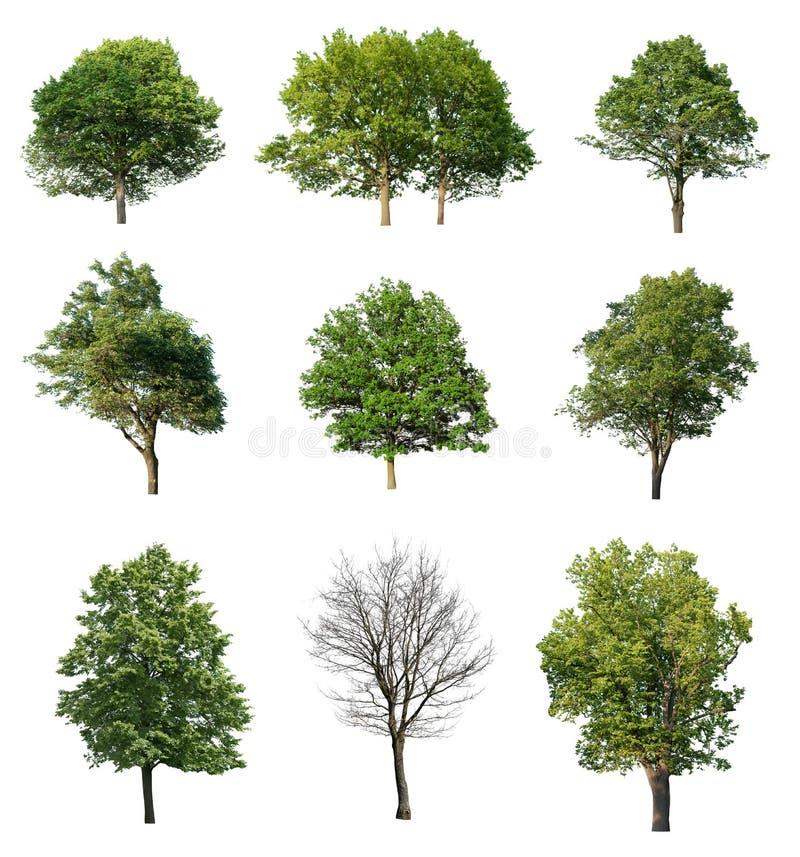 inkasowi drzewa ilustracji
