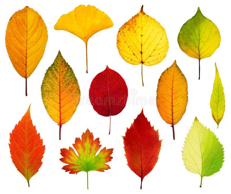 Inkasowi piękni kolorowi jesień liście odizolowywający na białych półdupkach zdjęcia stock