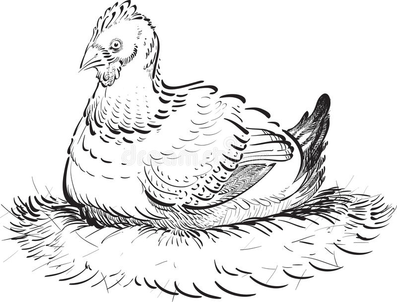 Download Inked Chicken stock vector. Image of nature, female, agriculture - 31531538