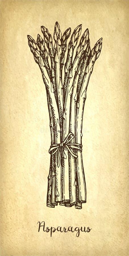 Inktschets van asperge stock illustratie