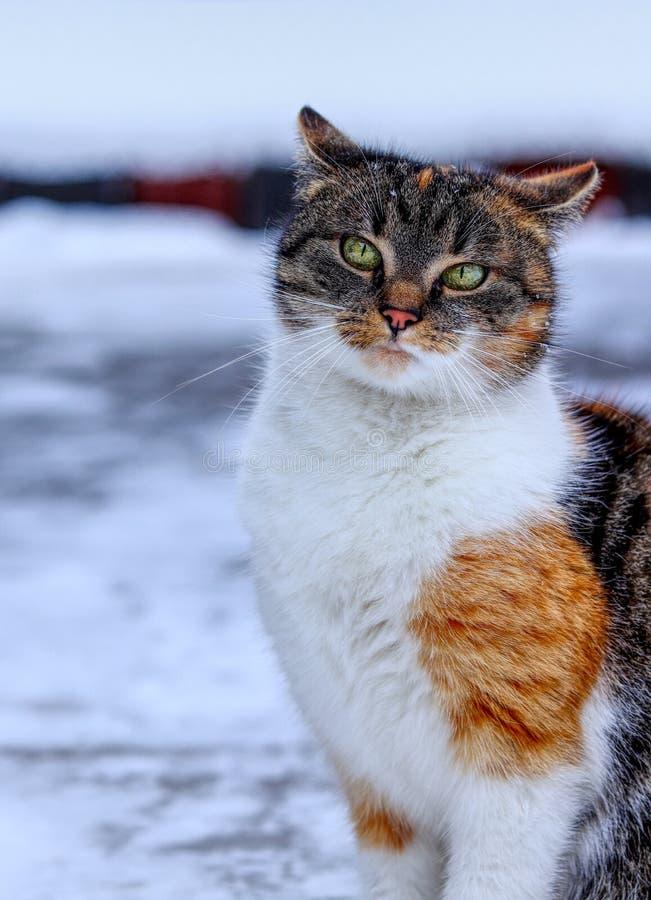 Inländische eingebildete Kätzchenstellung im Schnee Arroganter Katzengesichtsblick auf Kamera Hochnäsiges Gesicht Sehen Sie wie e lizenzfreie stockbilder