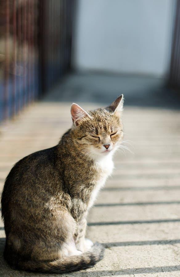 Inländische shorthair Katze Hintergrund am im Freien am sonnigen Sommertag lizenzfreie stockfotos